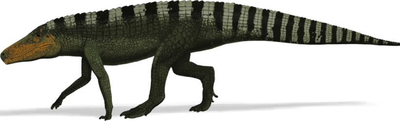 cropped-batrachatomus1-e1493905478450.png