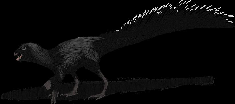 HeterodontosaurusLight