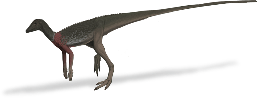 MarasuchusLight