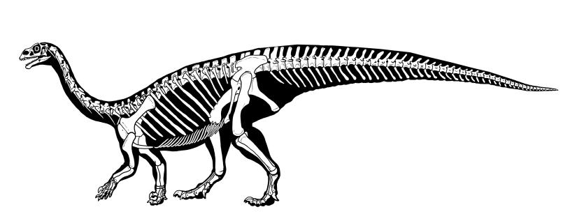 mussaurus skeletalAle Obero